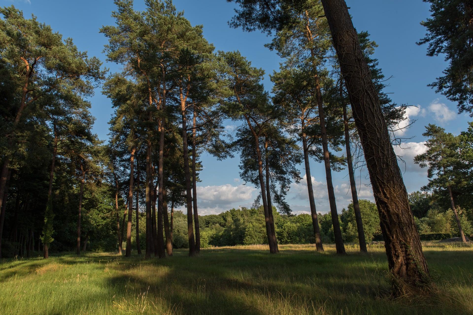 Domaine - Domaine La Butte aux Bois