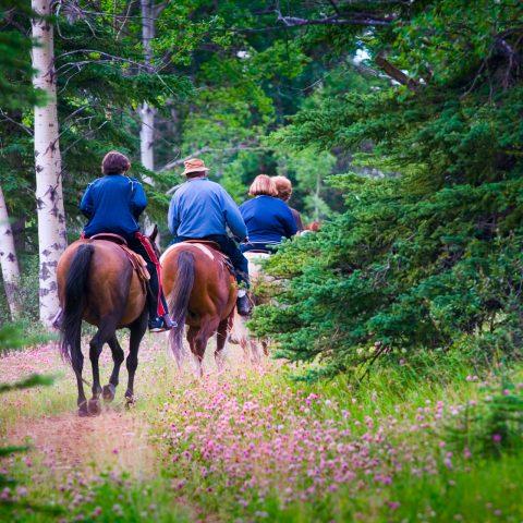 Activiteiten - Domaine La Butte aux Bois