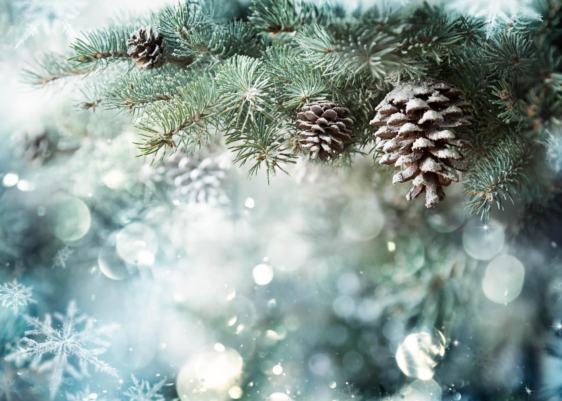Kerstfeest Nederland - Domaine La Butte aux Bois