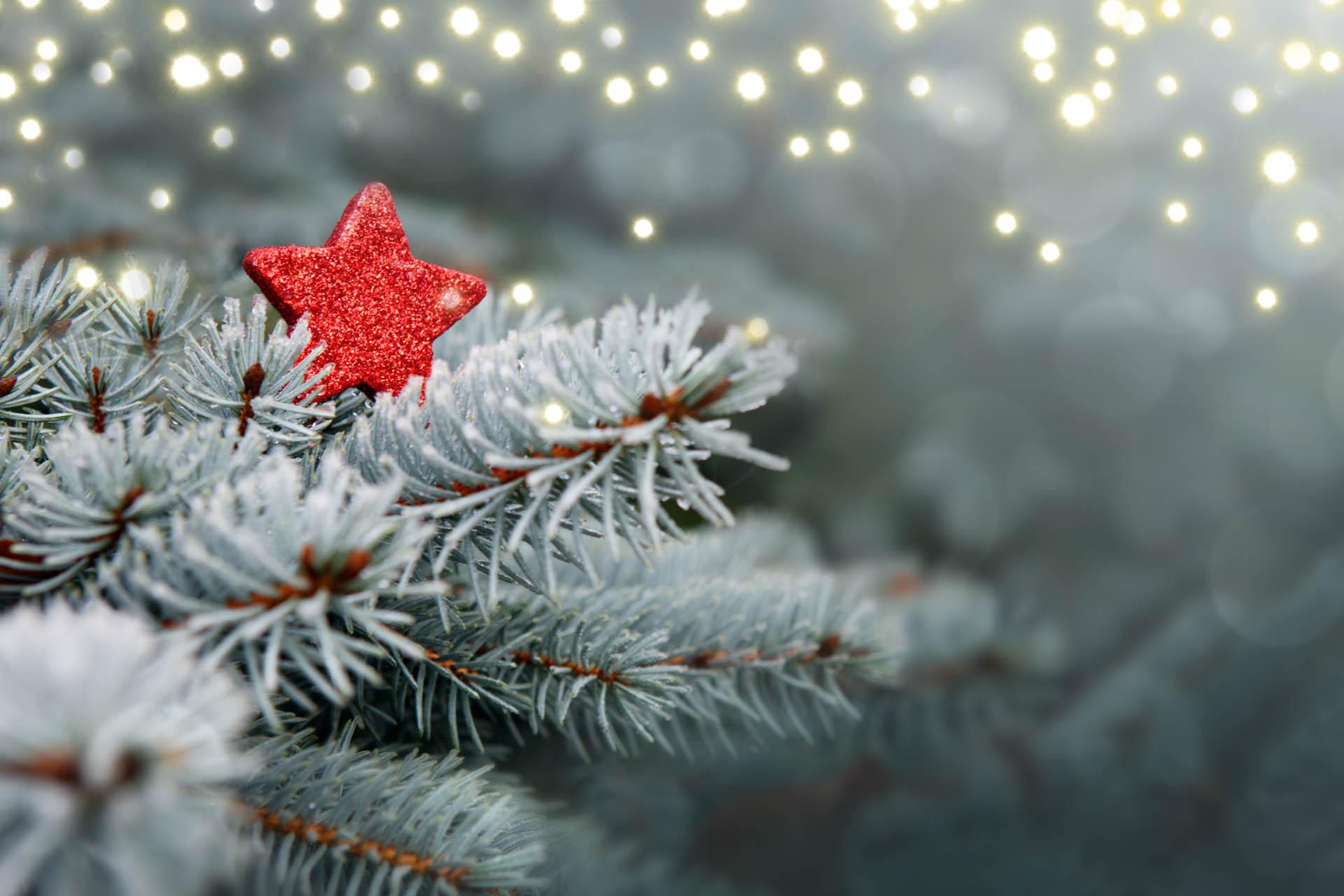 Kerstfeest Diepenbeek - Domaine La Butte aux Bois