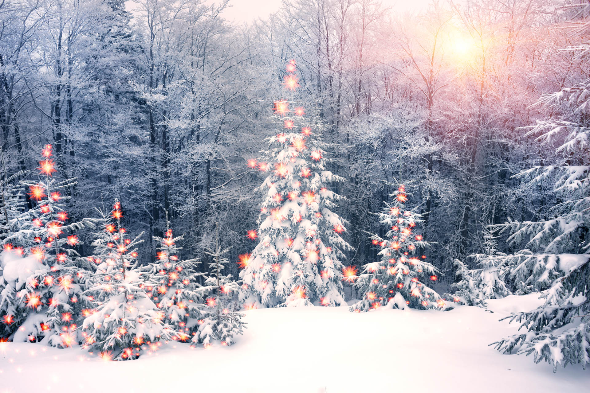 Kerstfeest Zutendaal - Domaine La Butte aux Bois